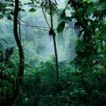 een oerwoud aan plugins